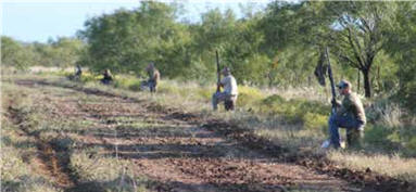 dove hunting great for father and son outings
